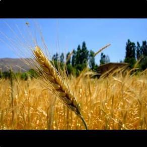 ۲۲۰ هکتار زمین آبی با تمامی ادوات کشاورزی